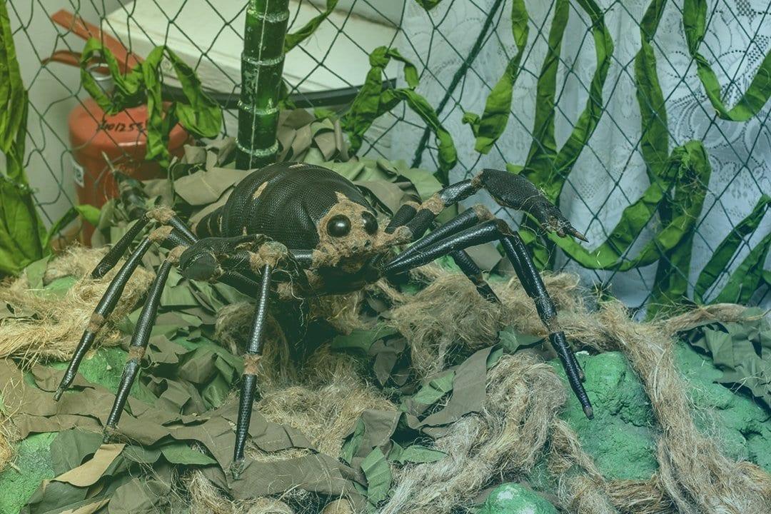 Jump scare spider